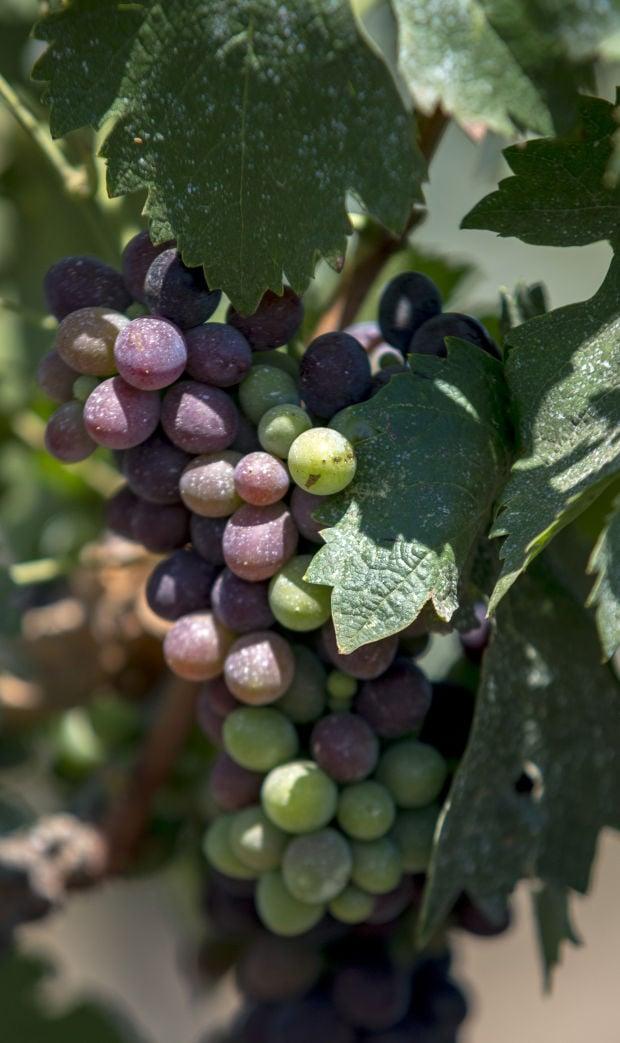 Lodi's Bechthold Vineyard named best in California