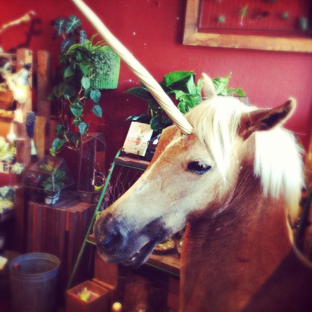 Peruse treasures and oddities at Paxton Gate