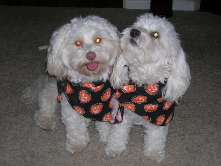 Bailey & Augie Trick or Treaters