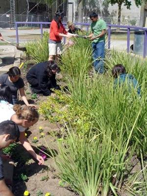 Lodi community responds, helps Tokay High with beautification