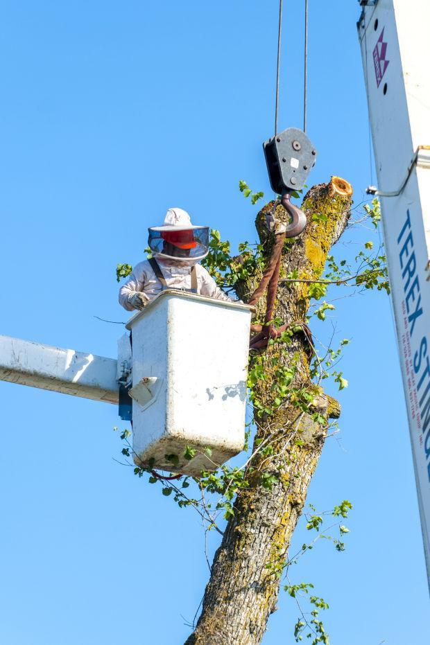 Professional tree removal in Lodi