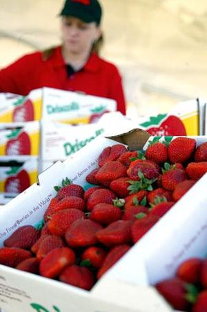 12th annual Strawberry Festival to be held this weekend in Galt