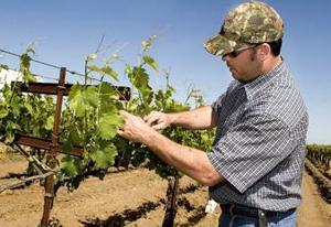 Michael-David Vineyards to give bonus to local growers
