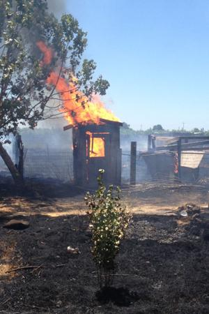 Acampo fire destroys outbuildings