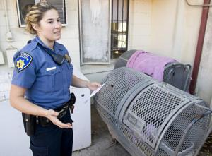 Feral cats run rampant in Lodi