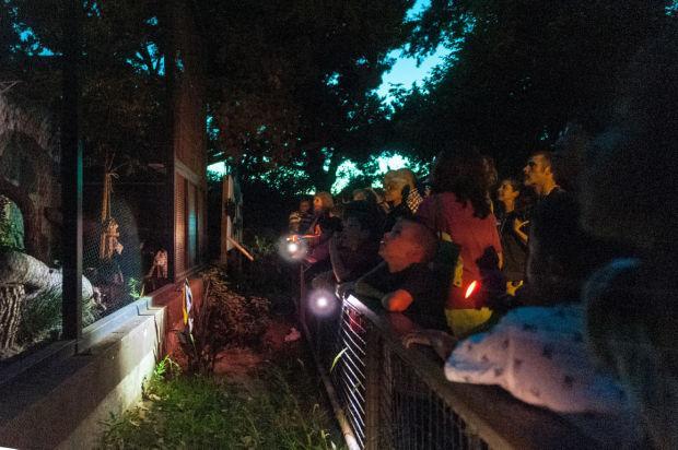 Micke Grove Zoo hosts Zoo After Dark