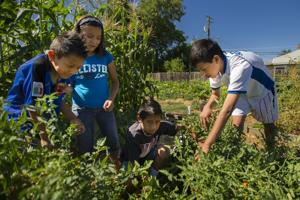 Growing community one tomato, zucchini, watermelon, pumpkin, strawberry at a time