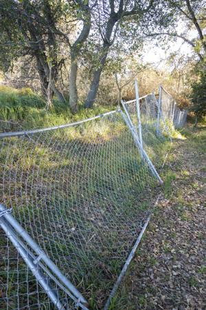 Chainlink in the Lodi Lake nature area?
