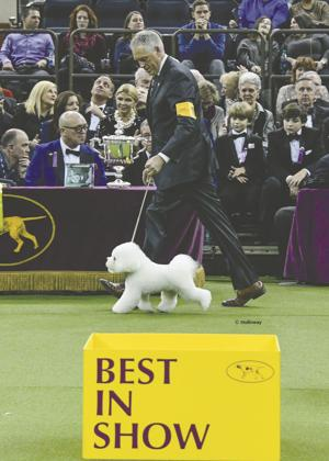 Acampo handler Bill McFadden shows top dog