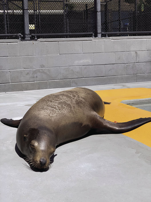 San Joaquin County Sheriff's officer helps rescue sea lion on highway