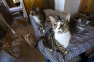 Galt cat shelter seeks donations to keep doors open