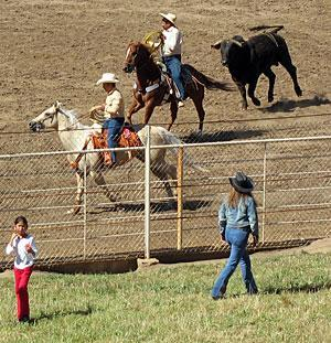 Full afternoon, evening of entertainment at Mexican rodeo