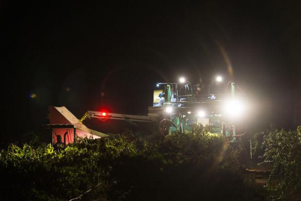 Lodi-made machines rumble through vineyards as grape harvest begins