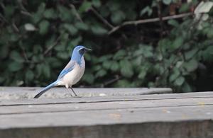 02_16_17_BACKYARD_BIRDS_03.JPG