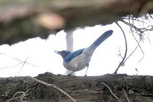 02_16_17_BACKYARD_BIRDS_05.JPG