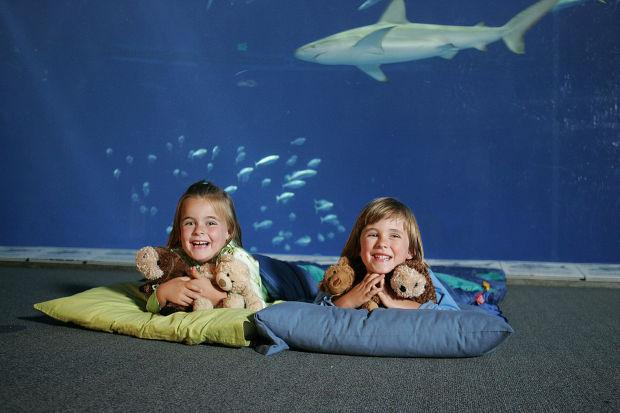 See what's in your own backyard at the Monterey Bay Aquarium