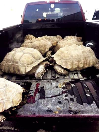 Lodi firefighters save more than two dozen shellshocked tortoises from fire
