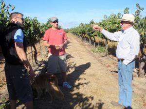 Discussing Harvest at Borra Vineyards