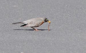 02_16_17_BACKYARD_BIRDS_10.JPG