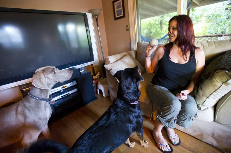 Valley fever can affect dogs, too