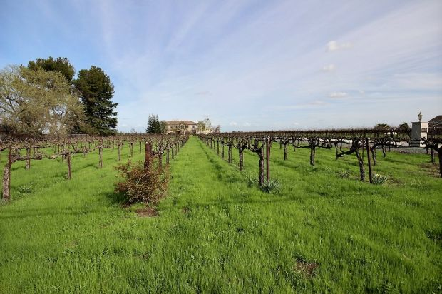 Nestled in vineyards, a home both stylish and secluded