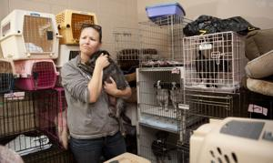Homeward bound: Lockeford groomer helps nonprofit find homes in Canada for 80 dogs