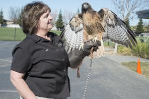 Galt Winter Bird Festival teaches community about wealth of local habitat