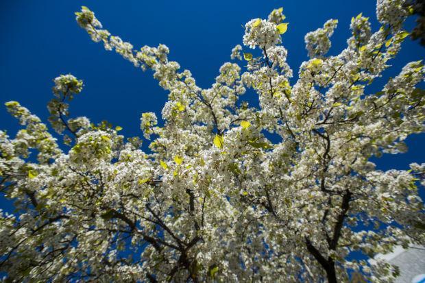 Looking like spring in Lodi