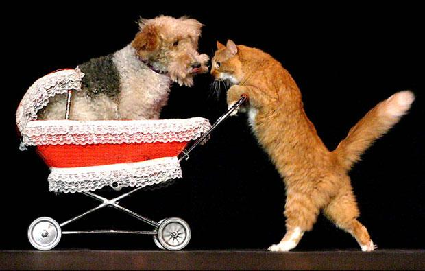 The original cats of comedy