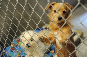 Lodi Animal Shelter full; adoptions lag