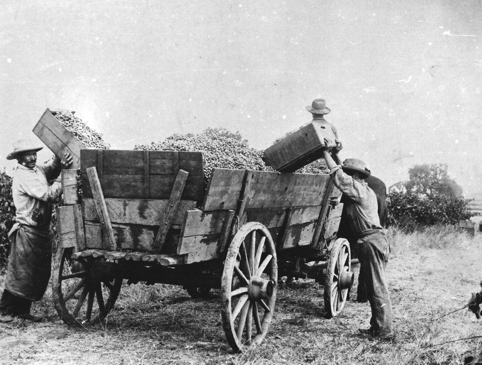 Amid Prohibition, Lodi kept 'fermented grape juice' flowing