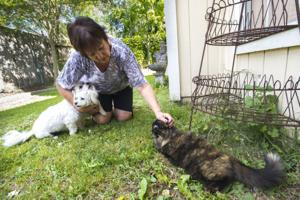 Galt Mayor Marylou Powers works to spay, neuter city's stray animals