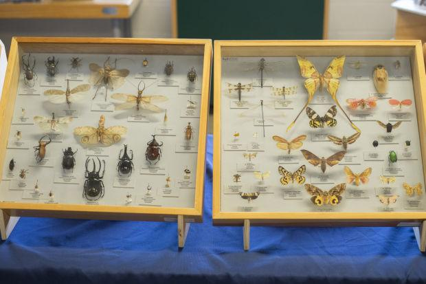 Insect Fest at World of Wonders Science Museum