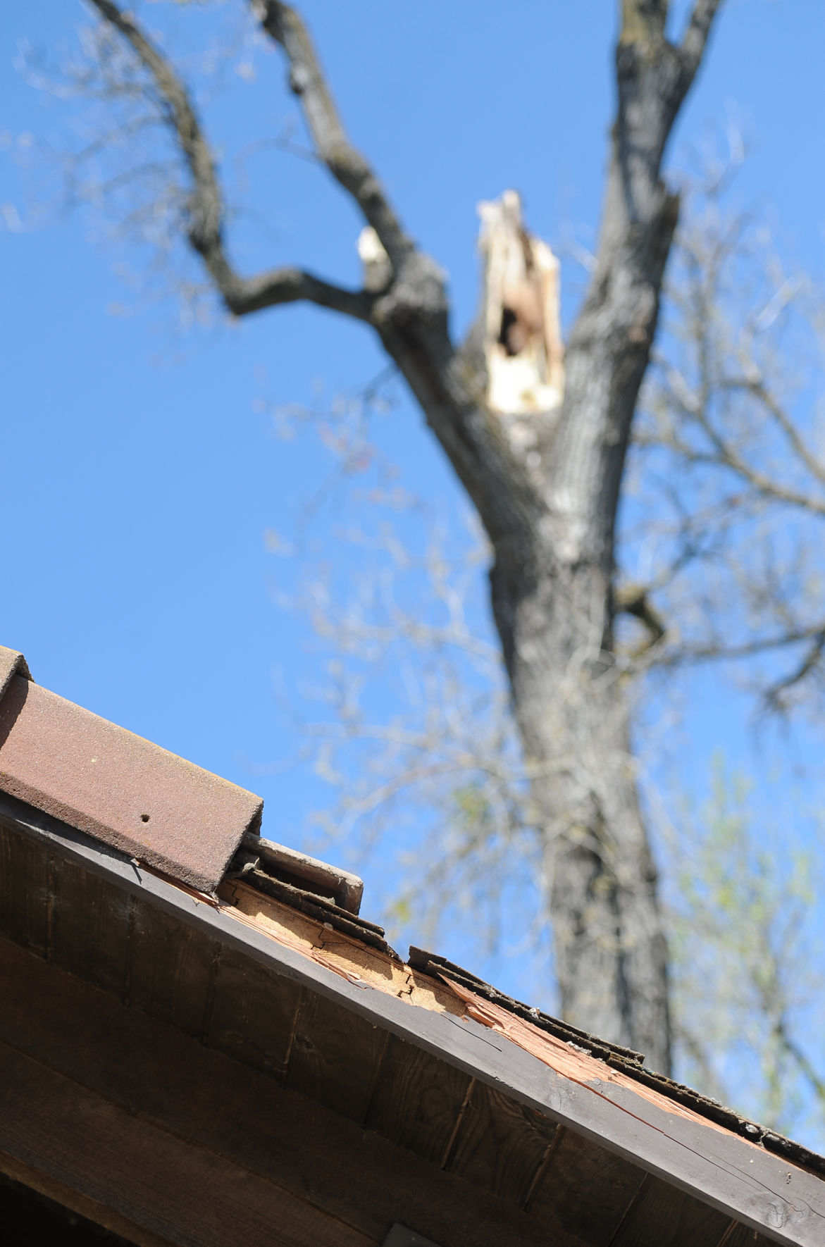 Fallen branch hits Lodi Lake bathroom