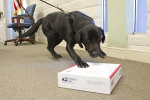 Agriculture-sniffing dog visits San Joaquin County, Lodi