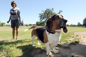 Lodi dog park dilemma: Should big dogs be separated from smaller dogs?