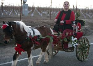 Carriage rides bring out Christmas spirit thanks to local equestrian center