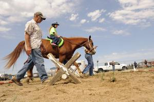 Death of therapeutic horse leaves hole in GALEP's heart