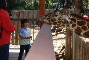 Public relations coordinator shares what awaits visitors at Sacramento Zoo