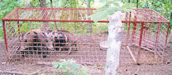 Feral Swine Sightings In Michigan Map.Wild Boars In Se Ohio News Logandaily Com