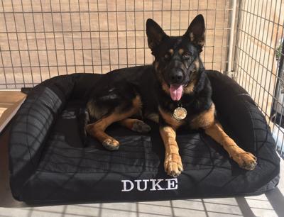 K-9 Duke in new bed