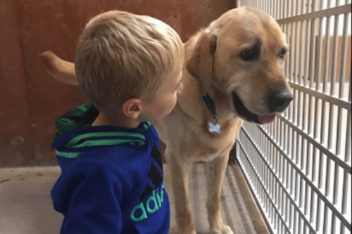 Little Boy's Plea To Find A Home For A Deaf Labrador Is Absolutely Adorable
