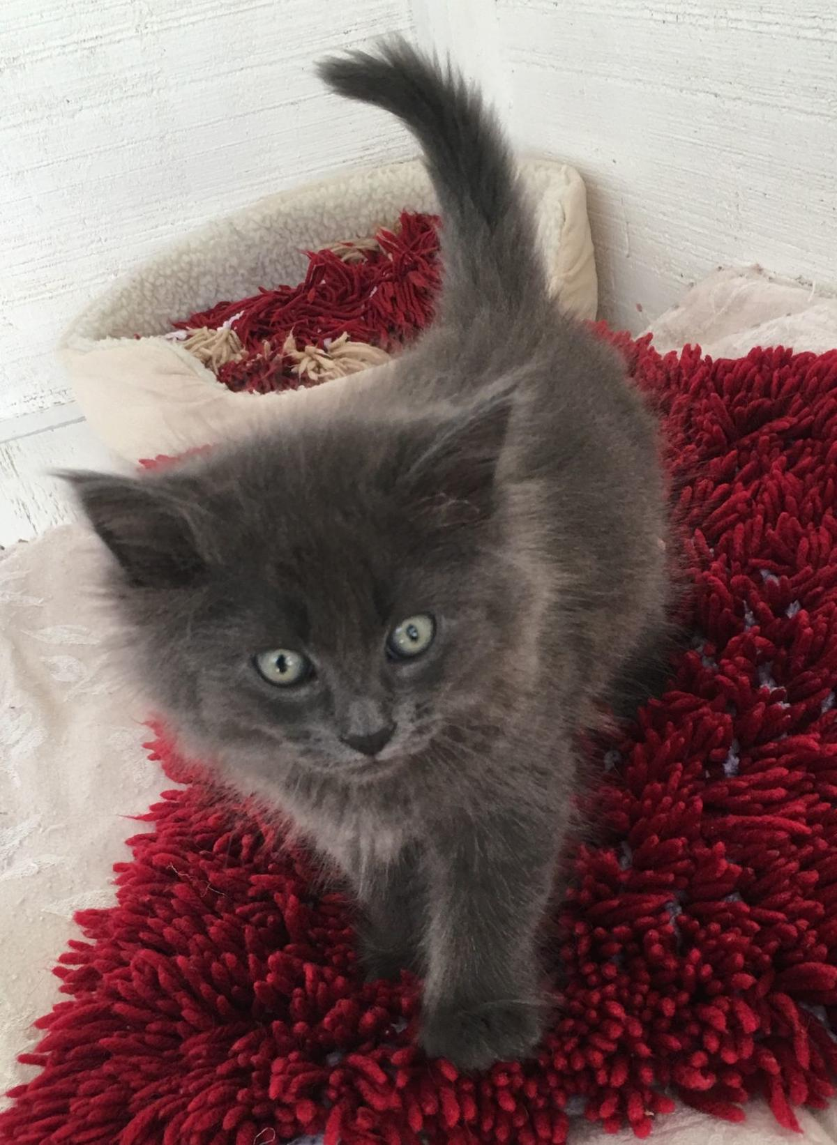 VIVA Pet of the Week -- Dixon