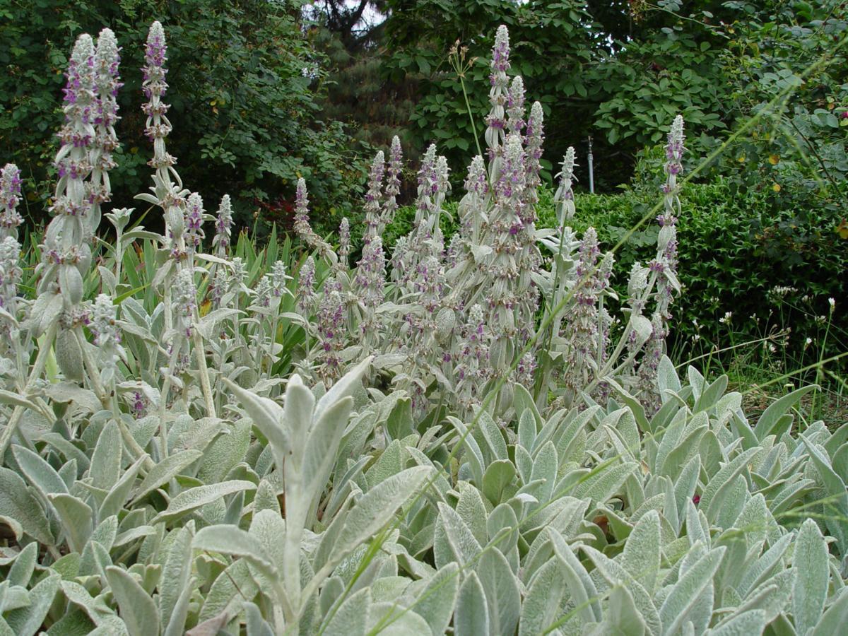 Yardsmart 5 Mediterranean Plants For Fall Lifestyles