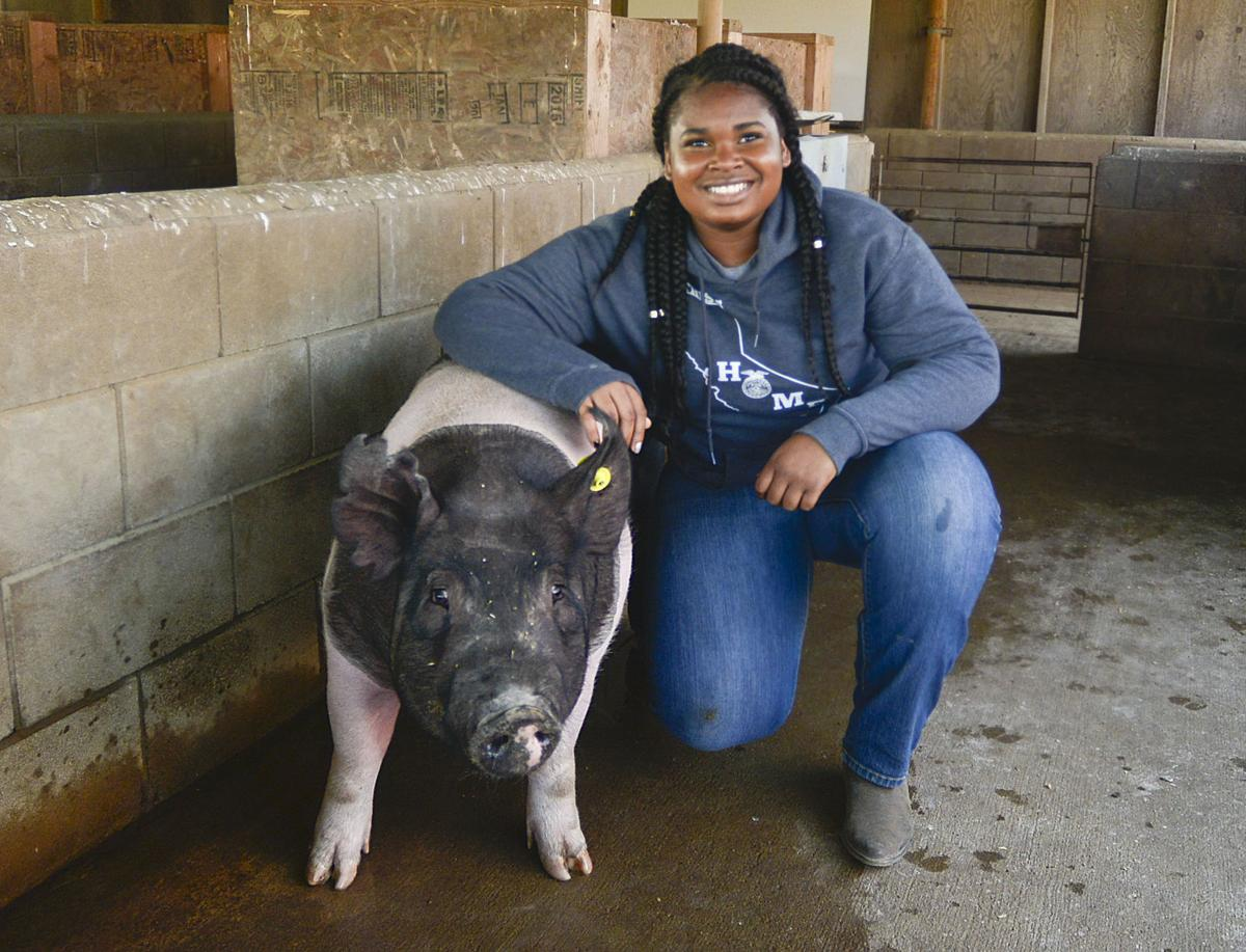 Bring home the bacon? Lompoc High FFA student struggling to sell pig