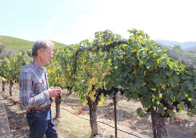 100819 Alma Rosa Winery
