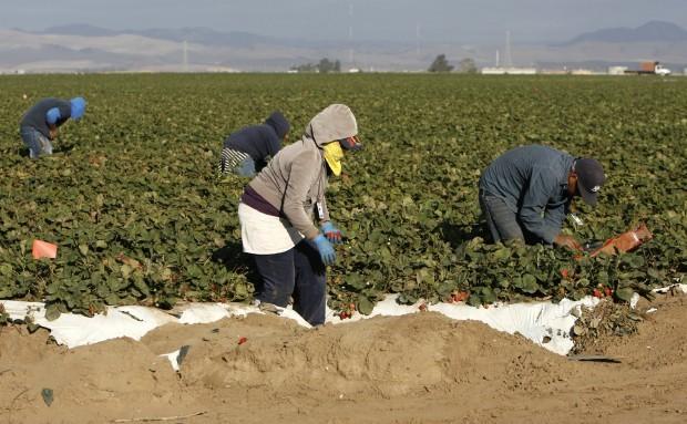 Local growers battling labor shortage
