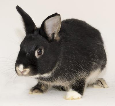 SMAC Pet of the Week -- Bonnie