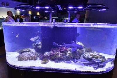 Registration open for Cabrillo High Aquarium Summer Camp ...