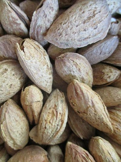 Tony Tomeo Highlight: Almonds